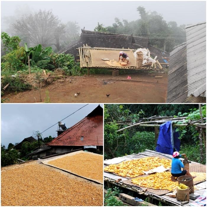 Village corn