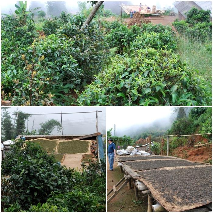 Village Tea