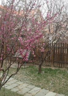 Blossoms in the garden.