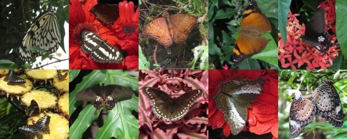 Butterflies at Singapore Airport