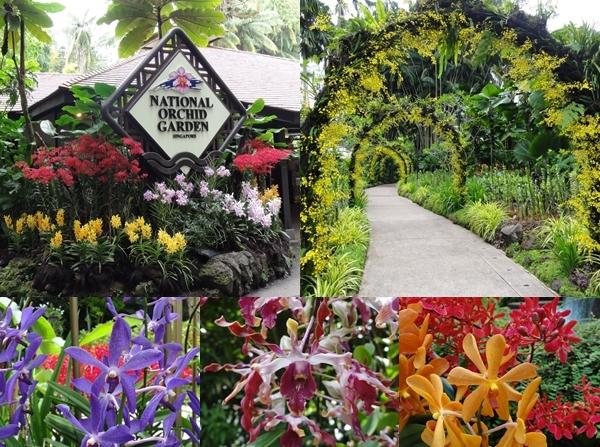 orchidgarden