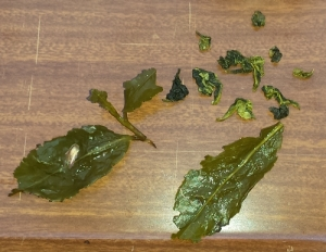 Oolong tea leaves, before and after steeping. (A semi-fermented tea.)