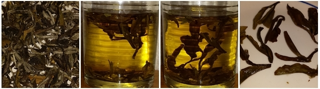 White Tea - dry leaves, steeped 10 minutes, steeped 20 minutes, and the leaves after steeping.