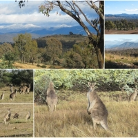 Learning to love Canberra